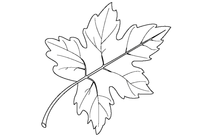 Fall  Free Coloring Pages  crayolacom